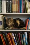 Cat Book 3