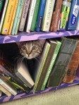 Cat Book 7