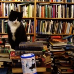 cat-with-books 2