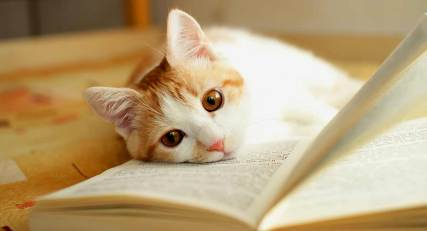 cat-with-books 3